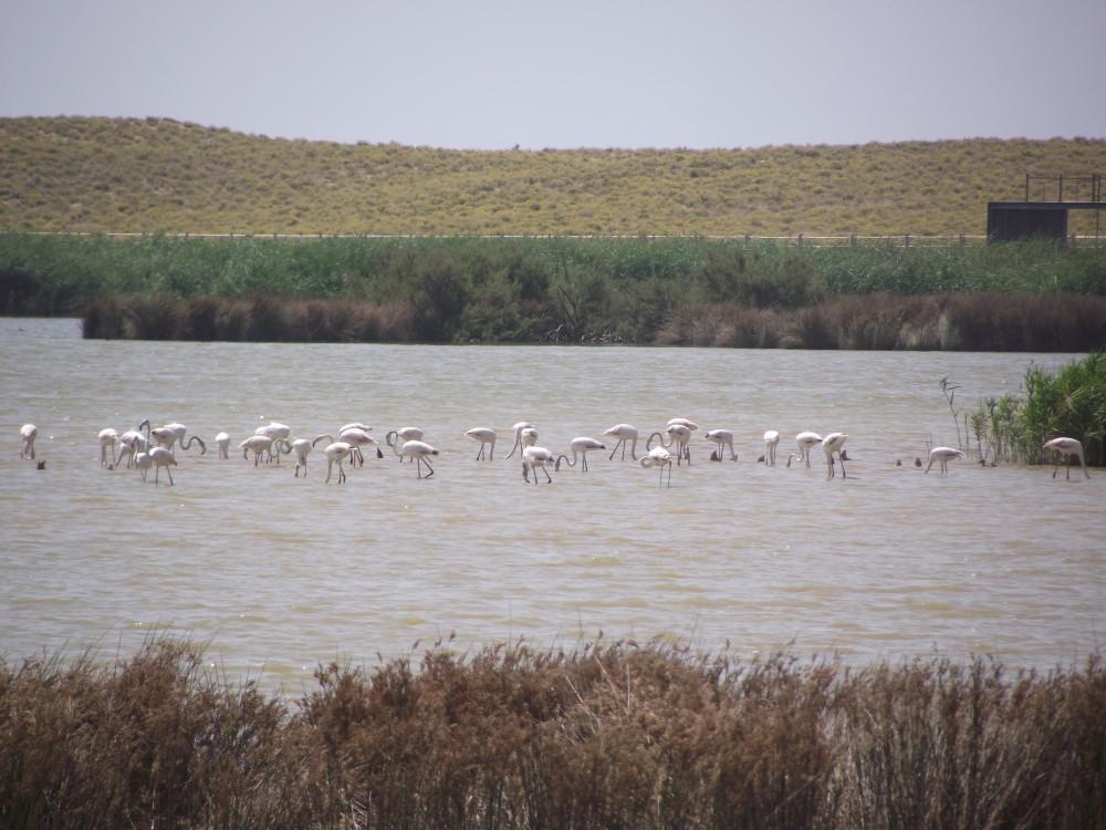 Lagoa dos Salgados