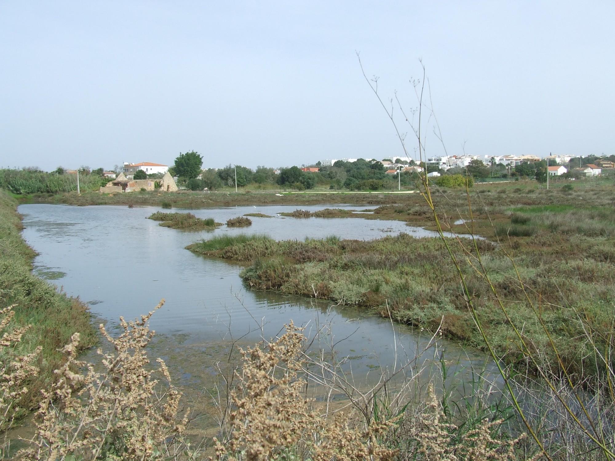 A marshland