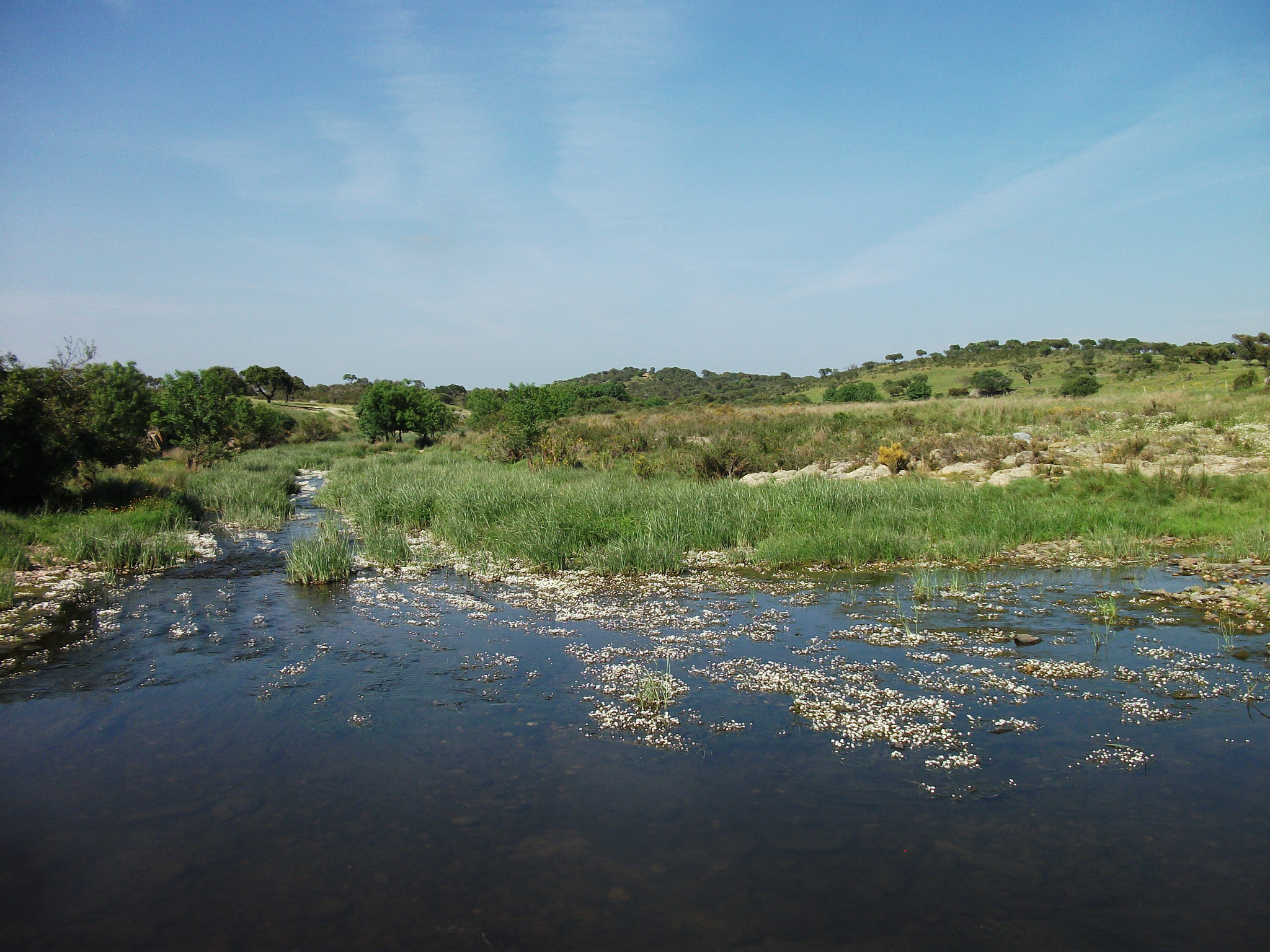 A river in the countryside
