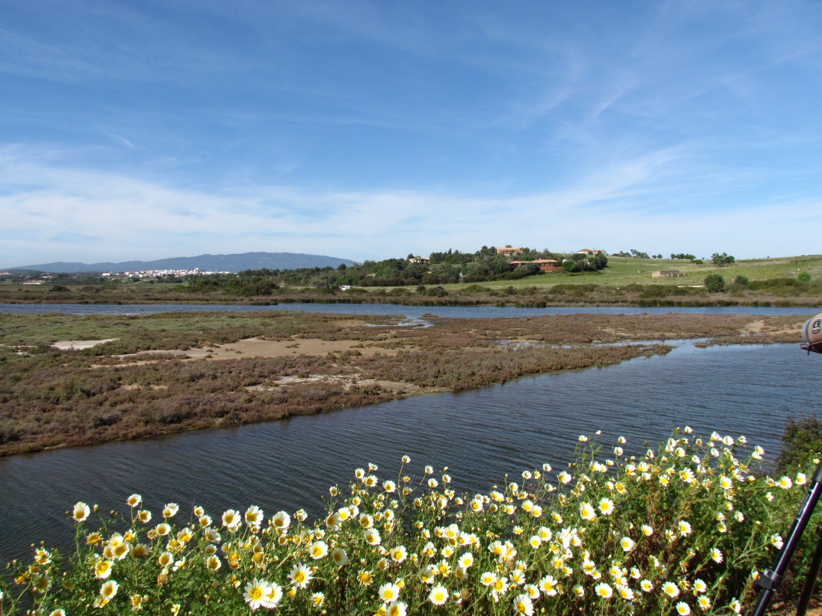 A marsh, flowers on the foreground and hills on the background