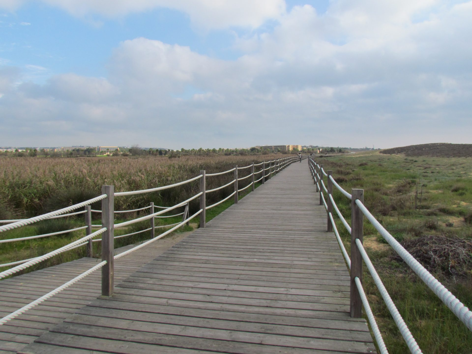 boardwalk by a lagoon