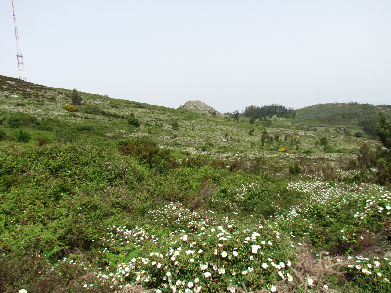 Flowers in the hills
