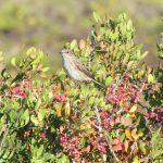 Flycatcher on a bush