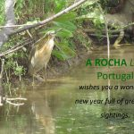 Squacco heron by a chanel with water and vegetation. Season greetings card