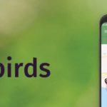 Followbirds logo